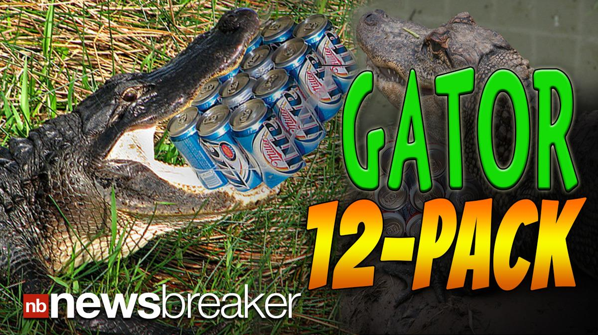 GATOR 12-PACK: Florida Man Attempts to Trade 4-Foot Alligator for Beer