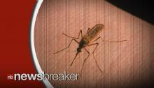 New Study Proves Mosquitos are Deadliest Animal to Humans