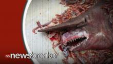 Florida Shrimp Fisherman Catches Rare Goblin Shark; Throws It Back in Ocean