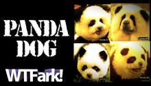 PANDA DOG: Italian Circus Busted Using Dogs Painted Like Pandas As Pandas