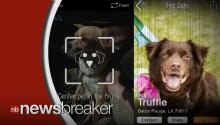 New App 'PetMatch' Let's Users Find New Dogs/Cats Identical To Their Old Ones