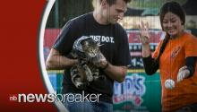 Twitter Reacts to Tara the Hero Cat Throwing First Pitch at Baseball Game