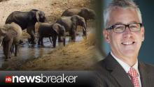 American Doctor Killed by Herd of Stampeding Elephants in Africa