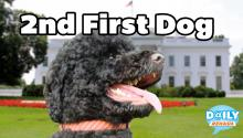 Newest Obama - Sunny the Dog