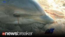 DOLPHINS DYING: Authorities 'Alarmed' at Mounting Deaths