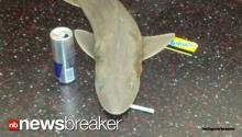 Mystery of Shark on Subway Appears to be Solved!
