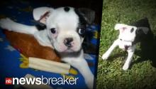 TEARJERKER: Puppy With Birth Defect Learns to Walk