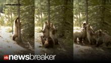 ITCHY BEARS: Time Lapse Cameras Catch Bears Swarming a Tree to Get Their Scratch On