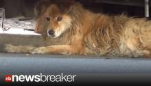 Google Maps Help Stray Dog Find Home; Video Goes Viral on Youtube