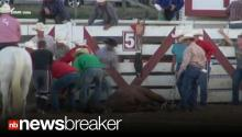 SHOCKED TO DEATH?: Animal Rights Group Claims Rodeo Caused Horse's Demise
