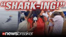 "SHARK-ING!: Commercial for ""Shark Week"" Funny & Shocking Viral Video"