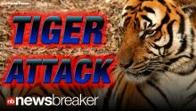 BREAKING: Woman in Critical Condition After Tiger Attack at Exotic Animal Park