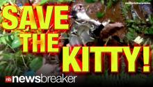 CAUGHT ON TAPE: Kitty Rescued from Clutches of Boa Constrictor