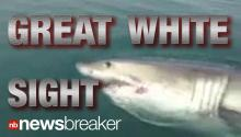 """JAWS"" CAUGHT ON TAPE: Great White Shark Spotted Off New Jersey Coast"