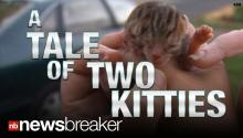 FREAKY: Cat born with 2 faces! (WATCH)