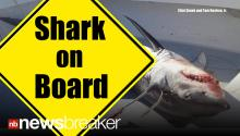 WHOA!: Mako Shark Jumps on to Fishing Vessel; Starts Eating Boat