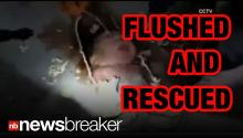AMAZING VIDEO: Baby Flushed Down Toilet Rescued Alive