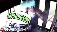CAUGHT ON TAPE: Deer Crashes Through Windshield of Moving Bus!