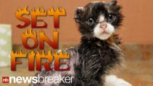DEVELOPING: Kitten Recovering After Being Set on Fire