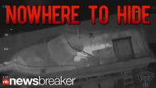 RAW VIDEO: Infrared Video Shows Boston Bombing Suspect Hiding in Boat