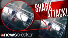 Great White Fright: Shark Tears Through Cage