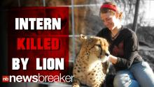 Calif. Intern Killed By Lion Identified