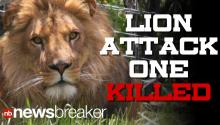 BREAKING: Female Intern Volunteer Attacked, Killed By Lion