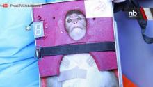 No Joke: Iran Sends Monkey Into Space