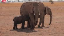 Tembo! Baby Elephant Rescue Will Melt Hearts