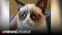 Cheer Up, Grumpy Cat!: Internet Sensation Kitty Gets Endorsement Deal