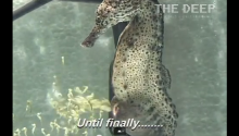 And Now, A Male Seahorse Gives Birth To Thousands Of Little Seahorses
