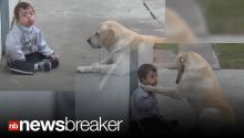 AWWWW!: Persistent Dog Wins Over Reluctant Little Boy with Down Syndrome