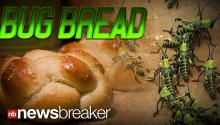 BUG BREAD: Students Design Wheat Made from Grasshoppers to Help Developing Countries
