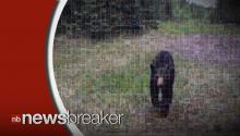 GOING VIRAL: Terrifying Bear Encounter Caught on Tape