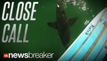 CLOSE CALL: A Man Comes Face to Face with a Shark While Paddleboarding; All Caught on Tape
