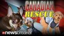 CANADIAN RESCUE: Dogs Displaced by Las Vegas Foreclosure Crisis Find New Home Up North