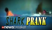 JOKESTER: Video of a Man Completely Terrified by Prank Shark Fin Goes Viral