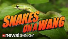 SNAKES IN A TOILET: Man Claims Snake Bit His Penis While Using the Restroom