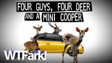 4 GUYS, 4 DEER AND A MINI-COOPER: 4 Florida Men Found With 4 Dead Deer In A Mini-Cooper