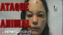 CAT GOT YOUR FACE?: Viral Video Shows Woman Attacked by Feline After Kicking Snow at it