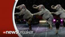 Ringling Brothers Set to Phase Out Elephants in All Circus Shows by 2018