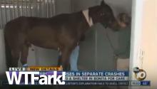 That Awkward Moment When You Cut To Your Reporter And Horse Penis Happens