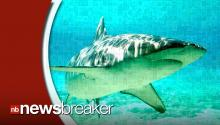 Open Feeding Frenzy! Hundreds of Sharks Spotted Off U.S. Coast!