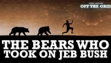 Off The Grid: The Bears Who Took on Jeb Bush