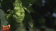 47Hops Sneak Peek