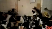 Today Is World Cat Day (Really). So In Its Honor, We Proudly Present... CAT MOSH PIT!!!