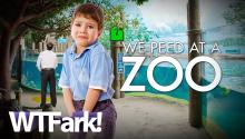 WE PEED AT A ZOO: Albuquerque Zoo Plagued With Puddles Of Urine. Made By Humans. Little Humans. (Also Known As Children)