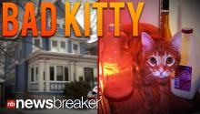 BAD KITTY: Teen Hired To Cat Sit For Neighbor Throws Filthy Orgy