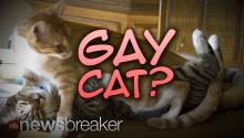 GAY CAT?: Nigerian Woman Kicks Out Pet Because She Says He Has Homosexual Tendencies