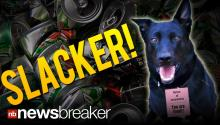 SLACKER!: Police Dog Fired for Playing in Garbage Instead of Sniffing Out Drugs